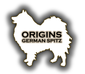 ORIGINS German Spitz